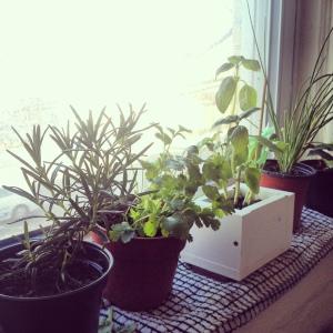 queens-herb-garden